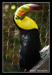 129 (Ral Montufar) Tags: naturaleza animales zoologico aviario ixtapaluca mundoanimal fotoguiaorg fg28022009