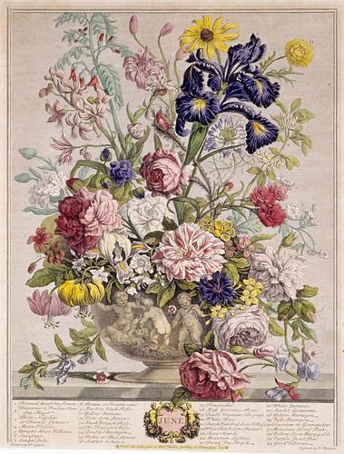 006- Junio- Los doce meses del año en flores