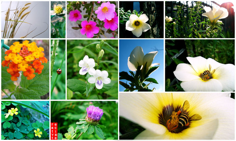 flower_power_800
