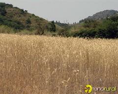 Cultivo cereales Partidos de Franquis