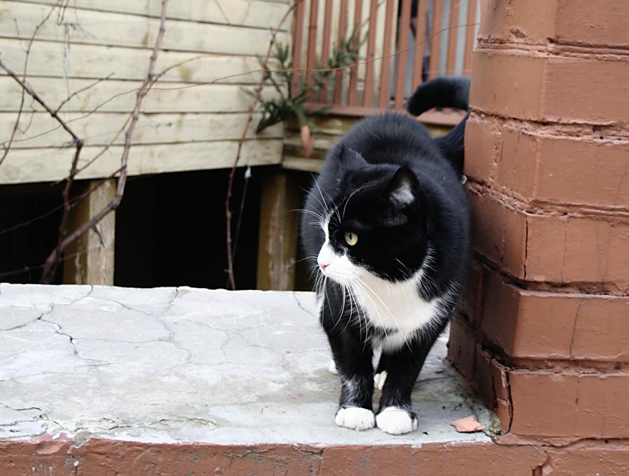 Булгаковский кот на Андреевском
