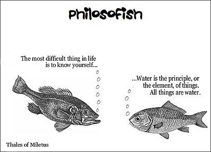 philosofish 6 small