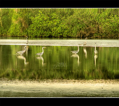 Waiting in Peace (Naj ) Tags: trees sea reflection bird beach water beautiful beauty grass birds canon wonder photography frames interesting scenery colours quality joy maldives 2009 hdr waterbirds addu naj hithadhoo sx110 vosplusbellesphotos