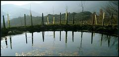 En el agua (Blanca natura) Tags: hojas rboles paisaje cielo laguna reflejos montaas charca prioro