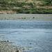 河原の水切り