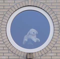 (CellarDoor56) Tags: dog window toy hond raam watchdog speelgoed waakhond