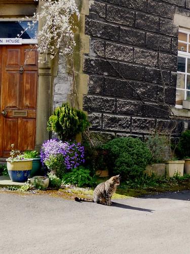 Castleton Cat
