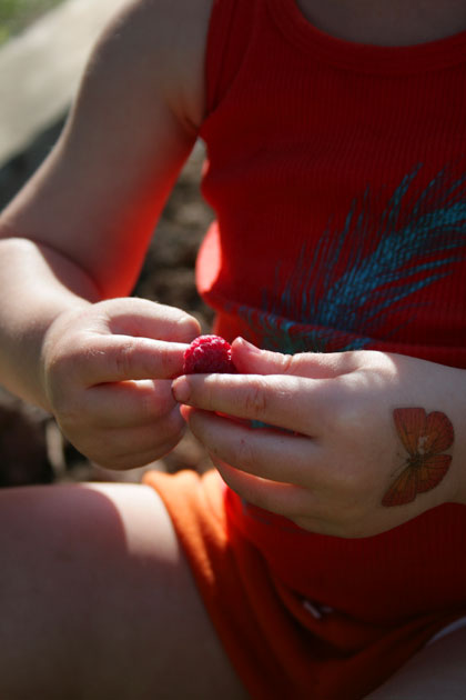 raspberry on