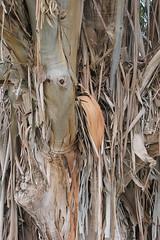 Eucalyptus (Elkhorn, California, United States) Photo