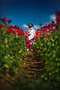 flower field (mylaphotography) Tags: flowers flower spring sandiego carlsbad flowerfield