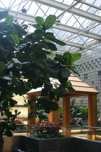 carlos lobby by lily