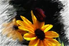 Black-eyed Susan (LauraBez) Tags: flower butterfly digitalart blackeyedsusan