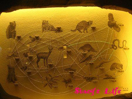 nEO_IMG_博物館三峽 250