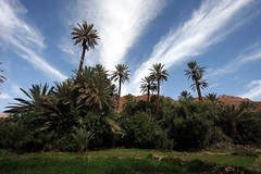 Wide Angle Palmery (MykReeve) Tags: trees sky cloud tree clouds palms wideangle palm palmtrees morocco palmtree wadi tinghir tinerhir palmery    geo:lat=31550928 geo:lon=5581141
