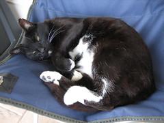 Lazy kitteh