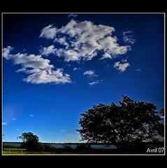 Dias de blanco y azul (Avril 07) Tags: arbol 5photosaday spiritofphotography tff1
