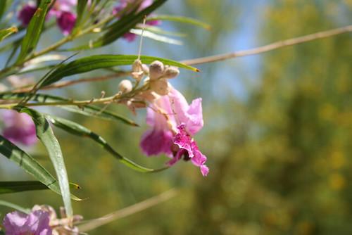 Delicate Blossom