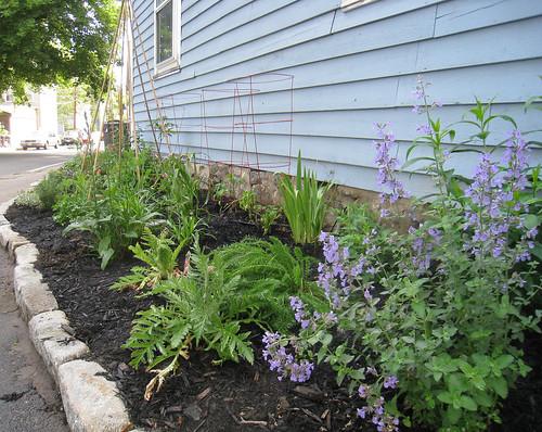 Garden Growing Early June