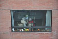 mis vecinas quieren ir a moscú (sudamericanas) Tags: viaje window ventana amigas frommywindow amistad vecindario readingabook voyerismo ancianas nikond90 theywanttotraveltomoscú comentadounlibro encerradaenmicasa