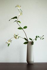 I still dream of blossom (Otomodachi) Tags: flowers white japan japanese blossom ikebana container vase wit bloesem bloemen flowerarrangement vaas japans japaneseflowerarrangement bloemschikking schikking
