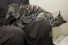 feline vaccinations