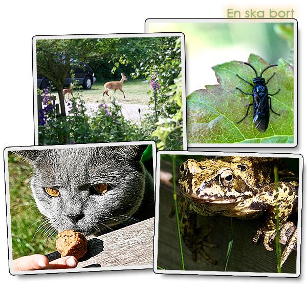 Trädgårdsdjur