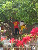 Kids playing in a tree in the cour…