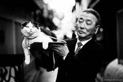 Kyoto Godfather (Jrme Pierson) Tags: street urban pet white black blanco japan cat photography japanese 50mm kyoto chat noir power shot f14 negro sigma master gion yakuza blanc godfather japon mafia matou parrain pontocho japonais felin maitre  thelittledoglaughed thecatwhoturnedonandoff animal