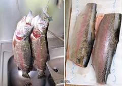 Forellen vorher und nachher / Trouts before and afterwards (Yogi 58) Tags: fishing trout filet forelle angeln troutfishing yogi58 forellenangeln vorhernachher jörgsteiof greatfish fishingindenmark angelnindänemark