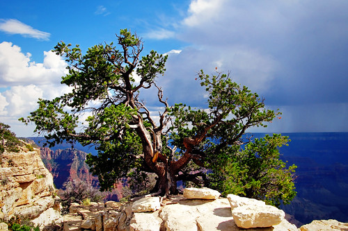 Top of the Grand Canyon
