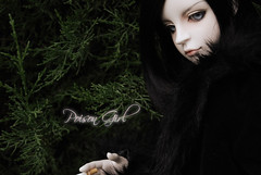 Ashlar - DOT Lahoo (-Poison Girl-) Tags: black doll goth dot sd bjd dollfie superdollfie rowan shall dreamofdoll balljointeddoll ashlar lahoo dotshall dotlahoo dodshall dodlahoo