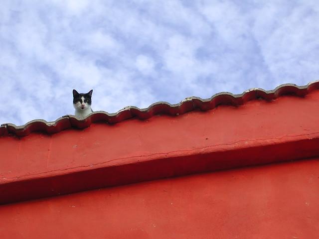 el gato sobre el tejado de ...
