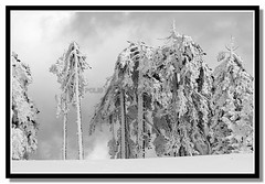 Troodos (Polis Poliviou) Tags: morning blue trees winter sky white mountain snow black cold tree nature monochrome beautiful weather pine clouds forest canon wonderful landscape eos frozen photo blackwhite flickr frost skiing cyprus pines snowboard february olympos snowglobe polis troodos nicosia naturesfinest supershot specland excellentscenic mediterraneanpines mediterraneanpine poliviou polispoliviou cypruspine troodospine