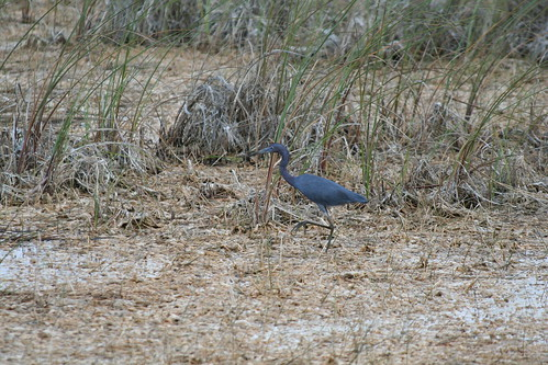 Everglades birds and animals