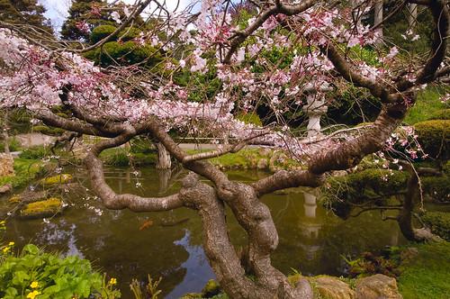 Hagiwara Japanese Tea Garden