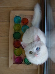 Ampersand (G524_persoon2) Tags: blue white green cat eyes kat groen blauw odd van ogen wit ampersand