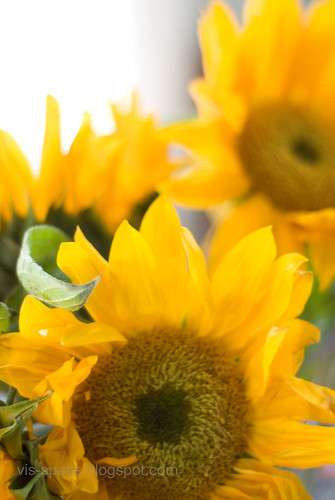 Sunflowers for your birthday