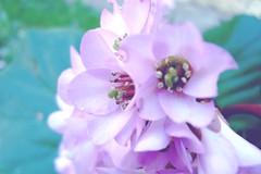 Delicate (Elanorya) Tags: flowers verde nature rosa fiori giardino particolare svago delicata
