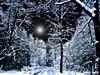 Moonlight walk (haikus*) Tags: trees winter snow night forest reflections way path moonlight orton proudshopper solarisazion