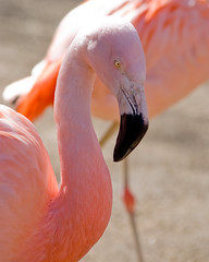 Flamingos at Roger Williams Park Zoo