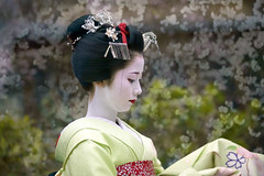 Mamehana in the cherry blossoms (Onihide) Tags: art japan kyoto maiko geisha cherryblossom japon japonaise gionkobu mamehana