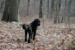 skippy inthe woods