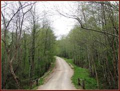Monte Corona (Isabel Castro Ahedo) Tags: primavera forest caminos ways cantabria senderos montecorona bosqueatlntico