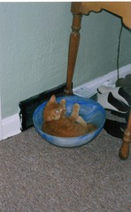 baby jasper in a bowl