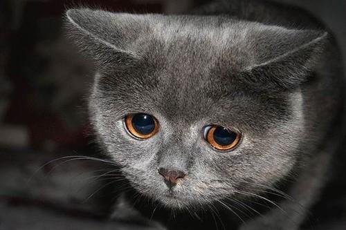 sad-cat3