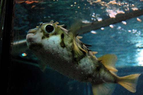KTBlowfishPS