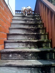 photo.jpg (harpere) Tags: dog dogs abigail isabel