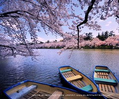 A lazy day. (Hirosaki Japan).  Glenn Waters. (Explored).  3,200 visits to this photo.  Thank you. (Glenn Waters in Japan.) Tags: park castle japan boat nikon explore  sakura cherryblossoms hirosaki moat     5photosaday explored   nikond700  glennwaters micarttttworldphotographyawards micartttt superstarthebest