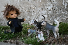 showdown between baby e and the wolves (cybermelli) Tags: new boy baby moon ball fur dawn eclipse twilight funny doll vampire tan edward wig tiny miel bjd mystic wolves joint breaking cullen jointed lati