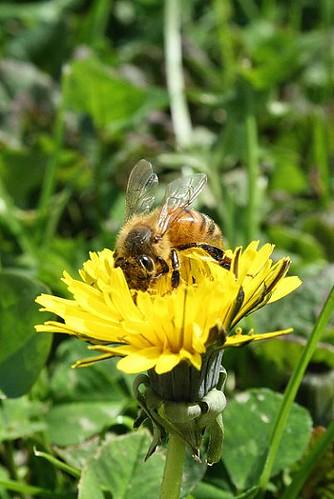 04090008beeflower